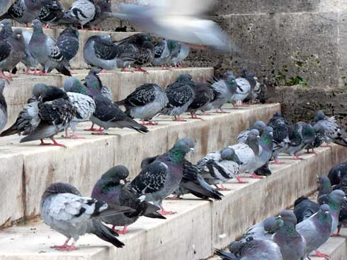 """Do you think we could bill Coyle for the cleanup costs?"" ""Nah, just borrow some pigeons from Wallgate."""