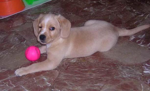 Dog pink ball