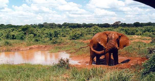 Elephant_Mudbath