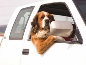 Harry Redknapp dog