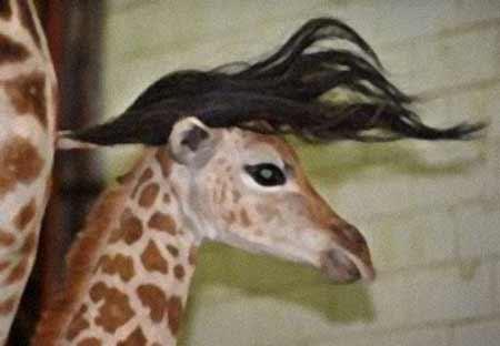 Giraffe hair