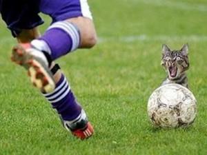 Kicking a cat