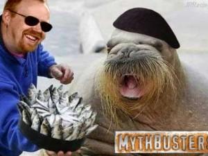 Mythbusters Jrracing64